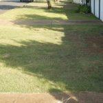 http://thegenerator.com.au/wordpress/wp-content/uploads/2016/08/lawn.jpg