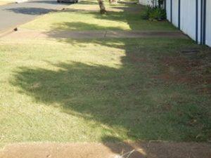 Evil, evil lawn